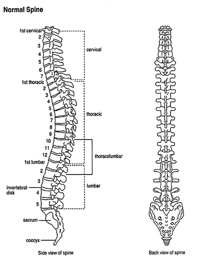 spine diagram canal overview of scoliosis for patients spine diagram chart